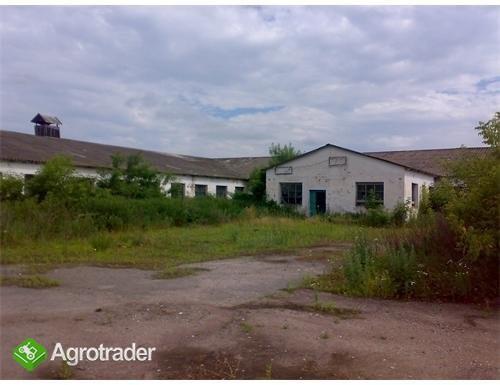 Ukraina.Gospodarstwo rolne,byla ferma trzody.Tanio - zdjęcie 5