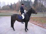 sprzedaż, targ koni- Olsztyn