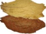 liście tytoniu