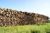 Drewno opałowe, kominkowe z Ukrainy, Duże ilości.