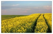 Ziemia rolna 415 hektarów Biskupiec