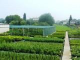 Krzewy ozdobne- ponad 250 odmian !