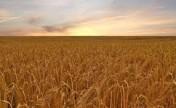 Ziemia Orna , gospodarstwo rolne 105 h, obsiane