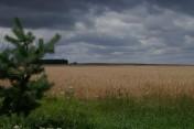 gospodarstwo rolne 140 h , uprawiane , obsiane