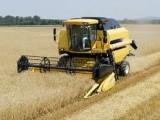 zbiur kukurydzy na ziarno, rzepaku zbóż