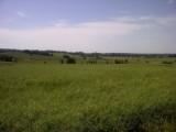 sprzedam 72 hektary, ziemia uprawiana , obsiana