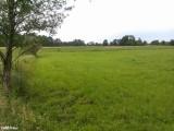 Sprzedam dużą działkę rolno - budowlaną trasa Toruń - Bydgoszcz