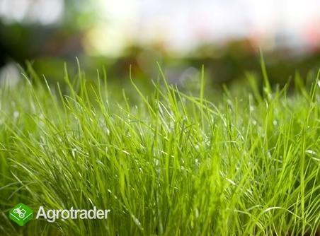 Koszenie trawy prace porządkowe