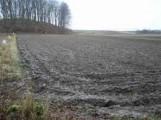 wezmę w dzierżawę grunty rolne