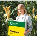 Kukurydza nasiona NEPOMUK NOWOSC