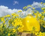 Ukraina.Ziarna rzepaku 1150 zl/tona sertyfikowane na biopaliwa i cele