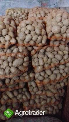 Sprzedam smaczne ziemniaki jadalne TAJFUN - zdjęcie 1