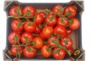 Sprzedam pomidory