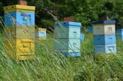 Sprzedam odkłady pszczele mazowieckie, Buckfast, ramka wielkopolska