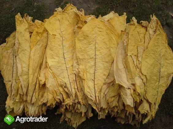 Liście tytoniu Virginia-Tabakblätter 1kg=3€