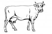 Skup bydła