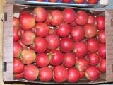 jabłka deserowe