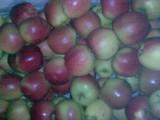 Jabłko deserowe