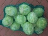 Sprzedam piękną kapustę białą kaliber 1 do 4 kg zdrowa i zielona
