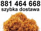 Świetnej jakości tytoń papierosowy do nabijania w gilzy! Tytoń Premium