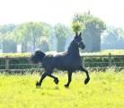 3 roczniak młody żeński koń przygotowywający dla nowego domu