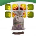 ślazowiec energetyczny, pensylwański ,nasiona ,sadzonki sprzedam