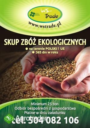 kupię kukurydzęekologiczną- skup kukurydzy ekologicznej