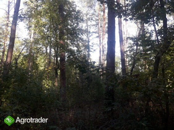 Sprzedam zadbany las z gruntem- 5 ha z dofinansowaniem z Unii do 2027r - zdjęcie 4