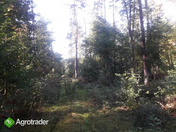 Sprzedam zadbany las z gruntem- 5 ha z dofinansowaniem z Unii do 2027r - zdjęcie 5