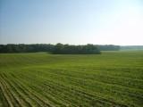 SPRZEDAM 475ha gruntów rolnych-okolice CHOSZCZNO