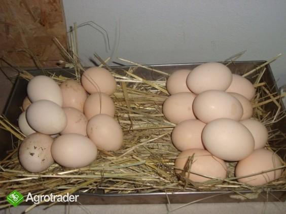 jaja wiejskie ściółkowe i od szczęśliwej kury