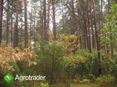 działka leśna 4000m2 - zdjęcie 1
