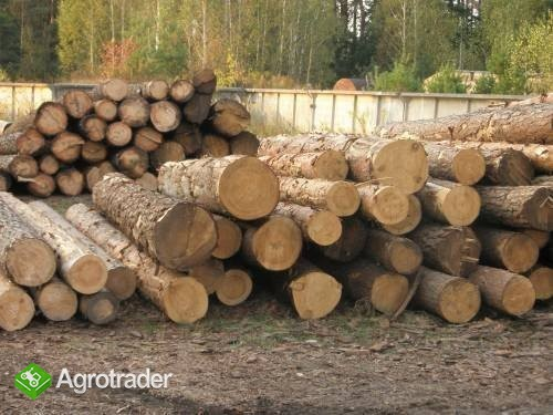 Ukraina.Drewno z Lasow Panstwowych.Cena 15 zl/m3 - zdjęcie 3