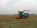 Usługowe koszenie kukurydzy i zielonek
