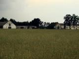 ferma drobiu kurnik