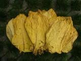 liście tytoniu-virginia gold tel. 5023 27 687